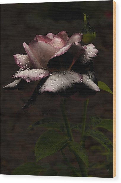 Rose After Dark Wood Print