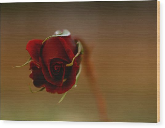 Rose Dream Wood Print by Gabriel Calahorra