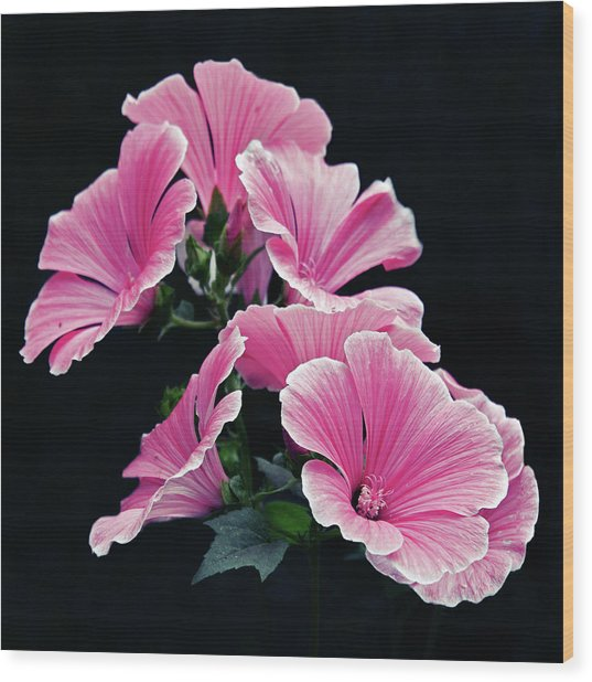 Rose Mallow Wood Print by Tanjica Perovic Photography