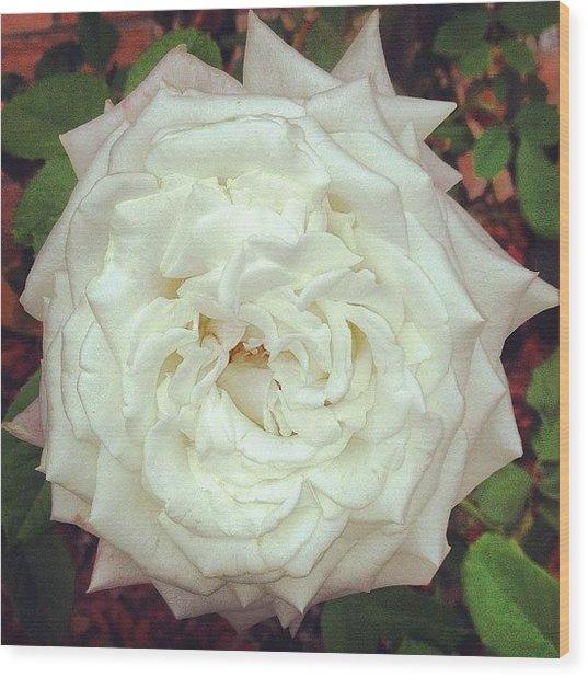 #rose Wood Print