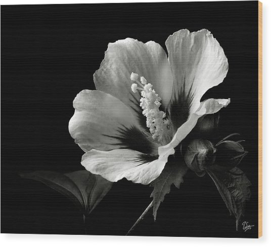 Rose Of Sharon In Black And White Wood Print