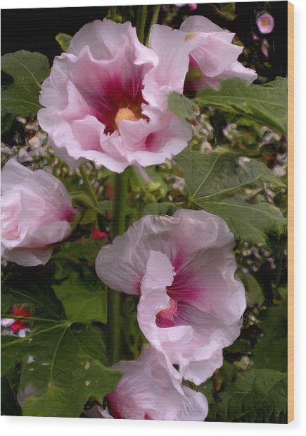 Rose Pink Hollyhocks Wood Print