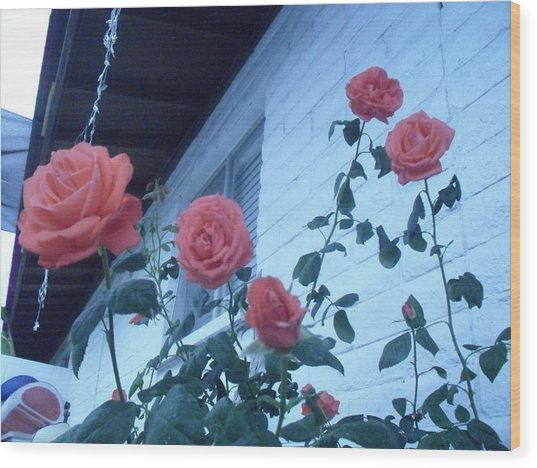 Roses By The Pool Wood Print
