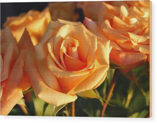 Roses For Me Wood Print