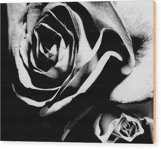 Roses Study 1 Wood Print