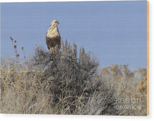Rough-legged Hawk Wood Print by Dennis Hammer