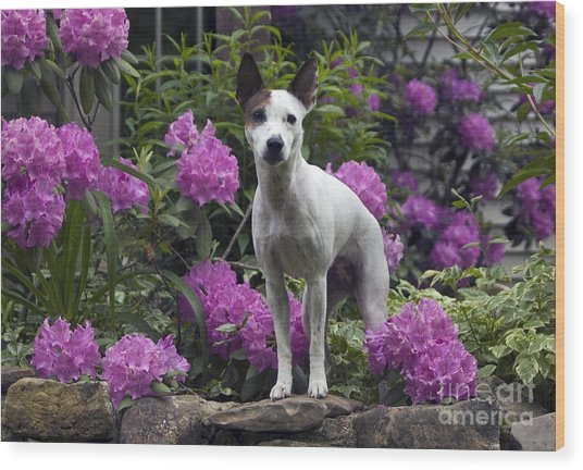 Ruby In The Garden Wood Print by Denise Dempster