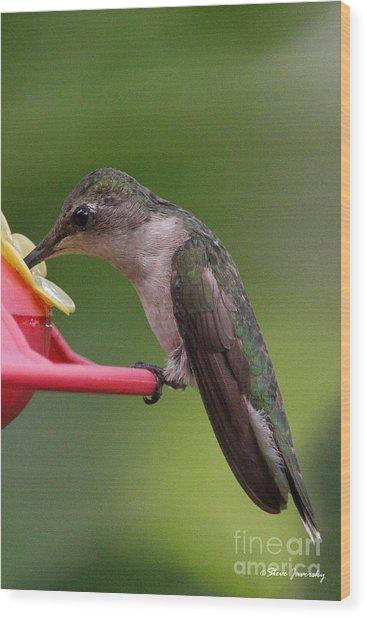 Ruby Throated Hummingbird Wood Print by Steve Javorsky