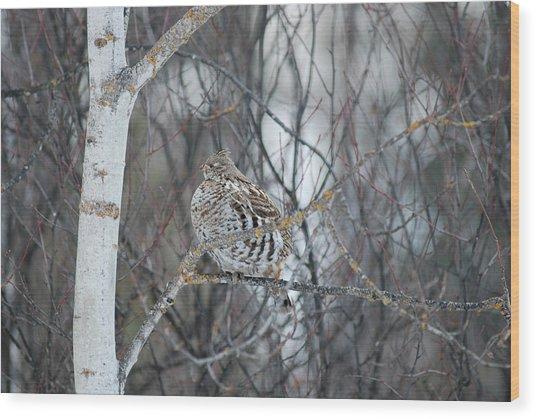 Ruffed Grouse Roosting Wood Print