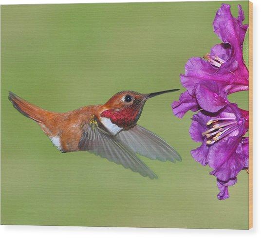 Rufous N Blooms Wood Print