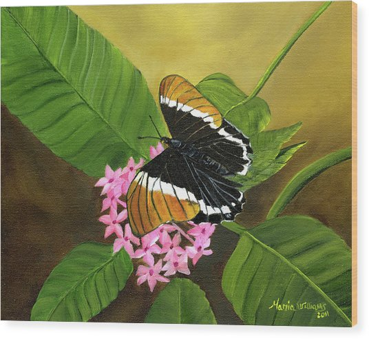 Rusty-tipped Butterfly  Wood Print by Maria Williams