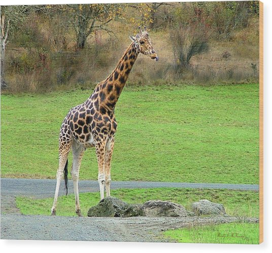 Safari Giraffe Wood Print