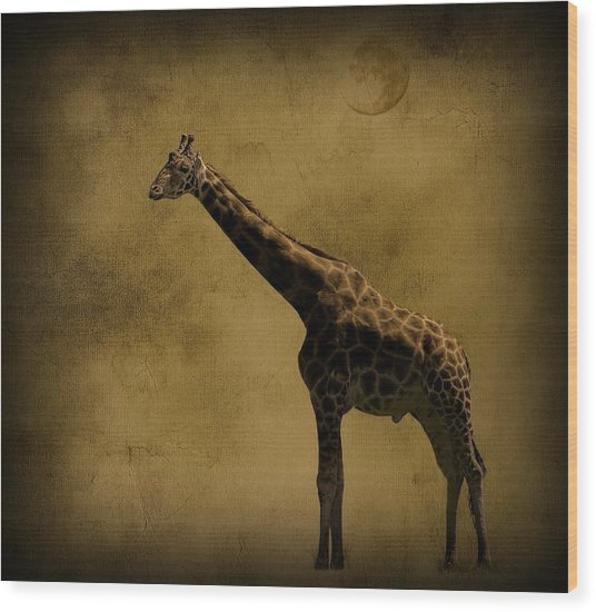 Safari Moon Wood Print