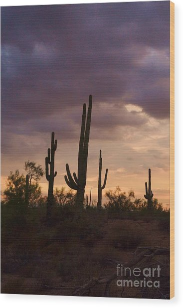 Saguaros After The Storm Wood Print by Patty Descalzi