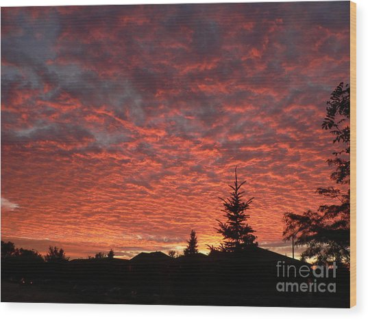 Sailor's Delight Wood Print