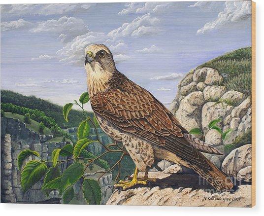Saker Falcon Falco Cherrug Wood Print