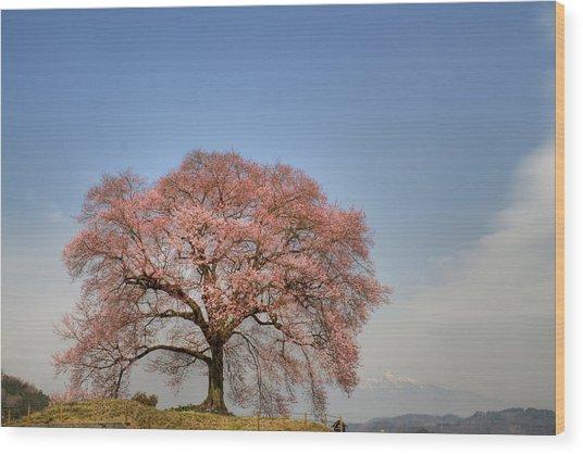 Sakura Sakura 2 Wood Print