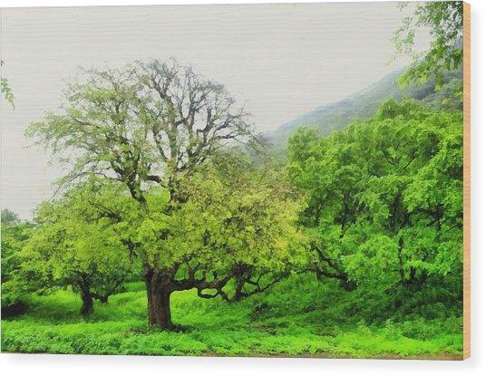 Salalah Green Wood Print