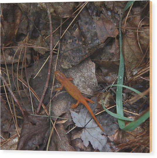 Salamander Wood Print by Lali Partsvania