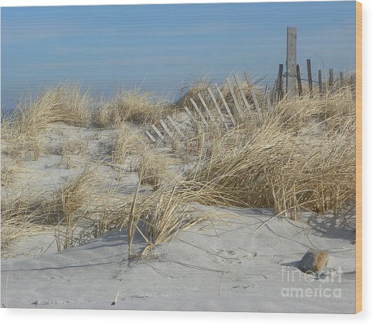Sandy Neck Beach Wood Print by John Doble