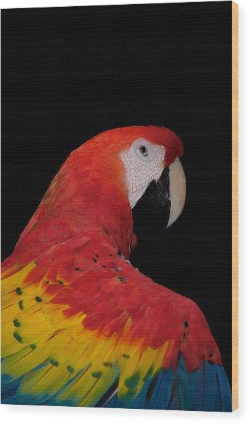 Scarlet Macaw Wood Print by C Thomas Willard