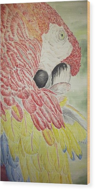 Scarlet Macaw Wood Print by Tim Forrester