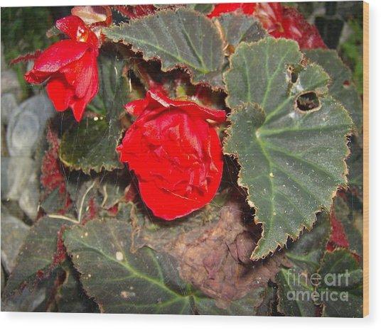 Scarlet Wood Print by Jane Whyte