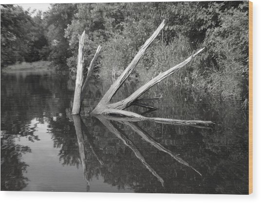 Scenes From The Kayak    Downed Trees Of The Ec River Back Waters Wood Print by Artist Orange