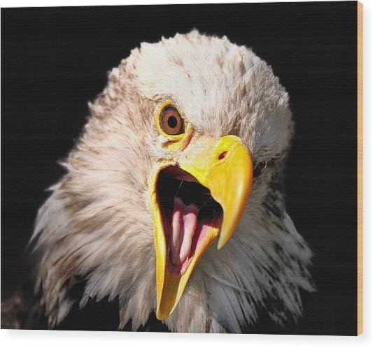 Screaming Eagle II Black Wood Print