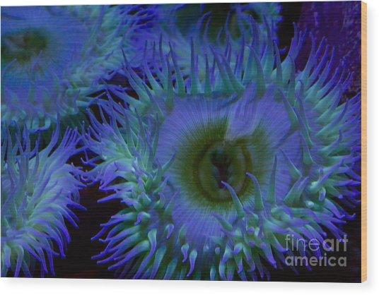 Sea Anemone Wood Print