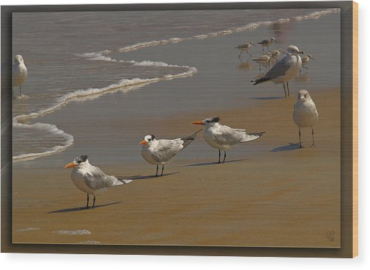 Sand And Sea Birds Wood Print