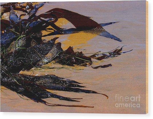 Pismo Beach Sea Drift Wood Print