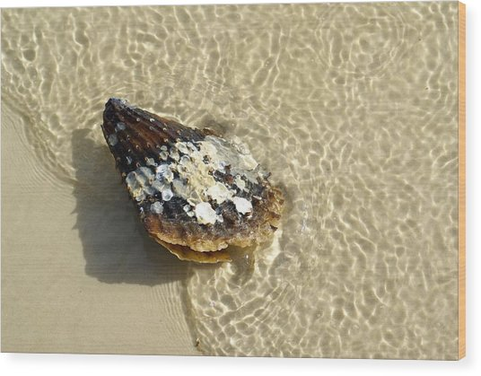 Sea Scallop Ride Wood Print by Florene Welebny