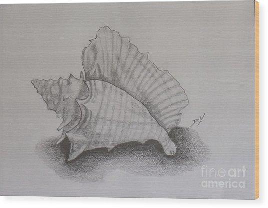 Sea Shell Wood Print by Debra Piro