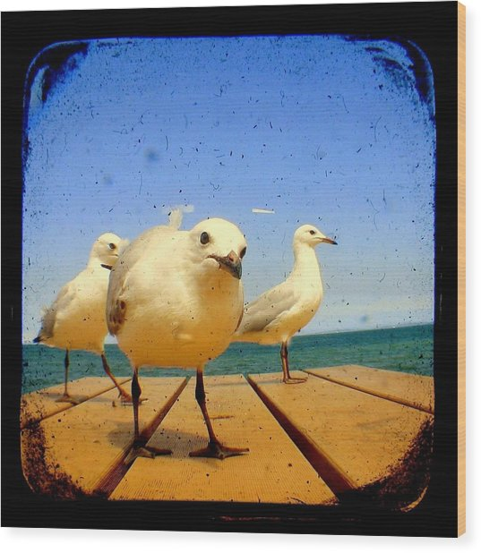Seagull At The Beach - Ttv  Wood Print by Tracy Milchick