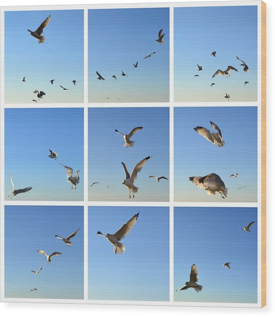 Seagull Collage 2 Wood Print