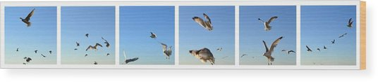 Seagull Collage Wood Print
