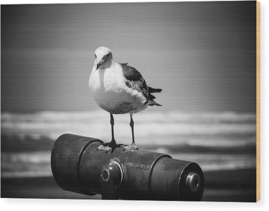 Seagull In Black And White Wood Print