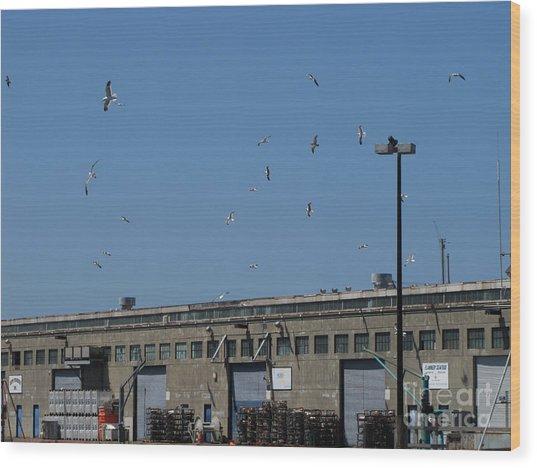 Seagulls By The Pier Wood Print by Serena Ballard