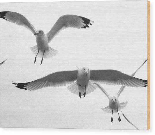 Seagulls Soaring Wood Print