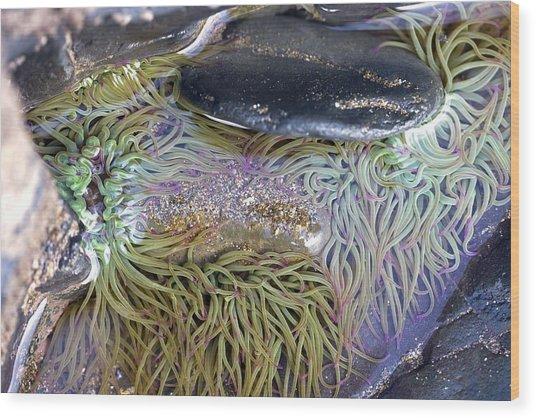 Seashore Rock Pool Wood Print by Dr Keith Wheeler