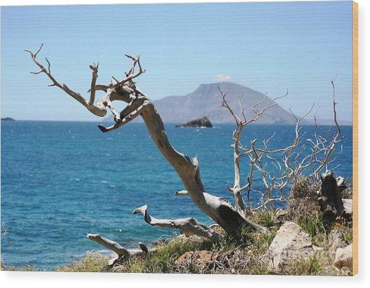Seaside Tree Wood Print by Phoenix Michael  Davis