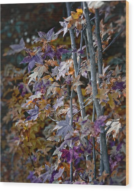Seasonal Changes Wood Print by Michael Putnam