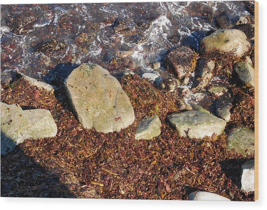 Seaweed By The Shore Wood Print