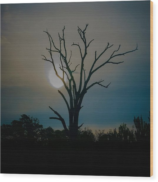 Sentinal At Sunrise Wood Print