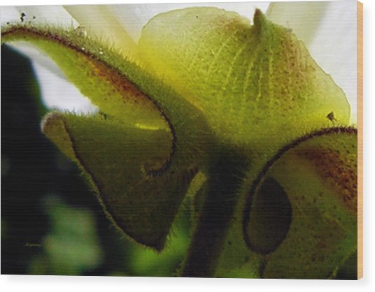 Sepals Too Wood Print by Ken Young