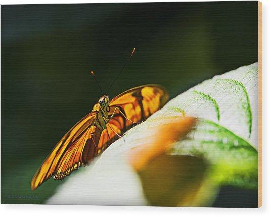 Set For Flight Wood Print