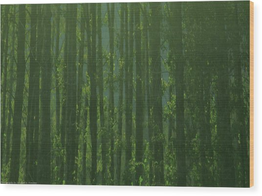 Seward Woods Wood Print