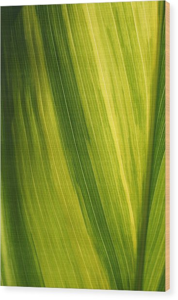 Shades Of Green Wood Print by Ken Riddle