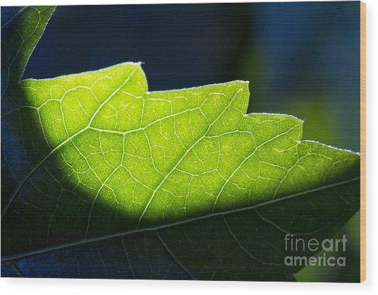 Shadow On Leaf -1 Wood Print
